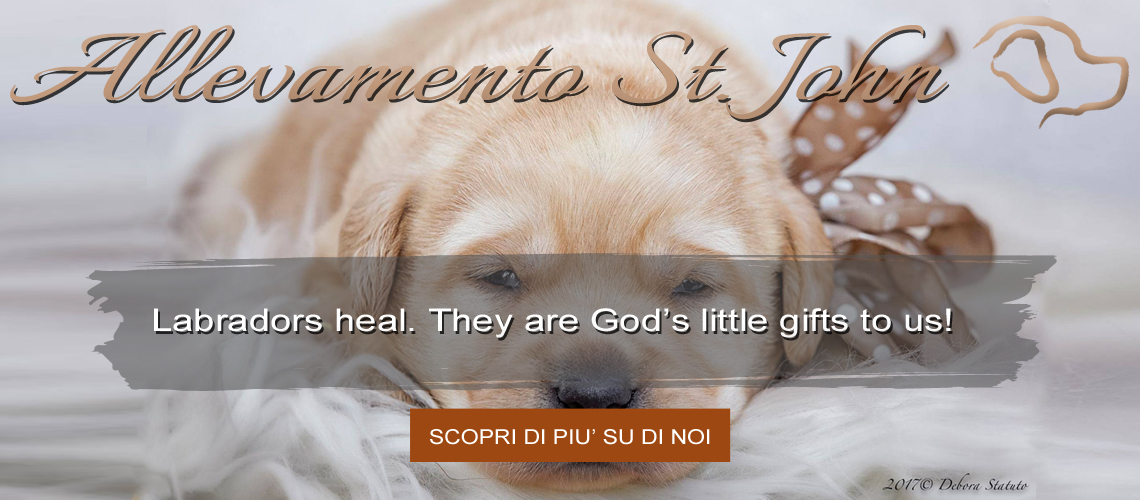 Labradors heal. They are God's little gifts to us!